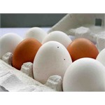 ECO-SHELL- High added-value raw materials from eggshell: large-scale optimization of an innovative processing technology and EU market deployment of the eggshell-derived products""